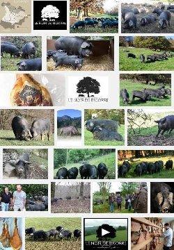 Porc noir de Bigorre (aoc)